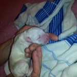 Der Erstgeborene