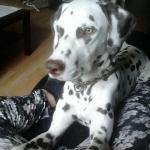 Henry, 9,5 Monate