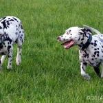 Humphrey & Shaya