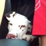 Bella, 9,5 Monate