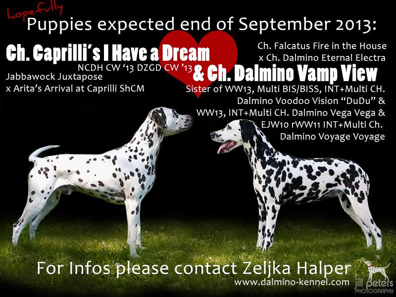 Deckanzeige Caprilli's I Have a Dream mit Dalmino Vamp View